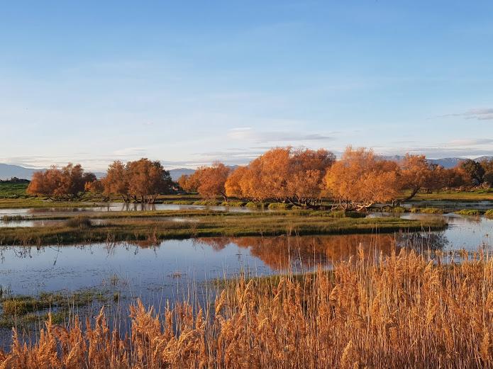 els estanys dels aiguamolls de l'emporda