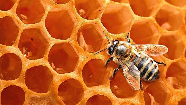 fira de la mel